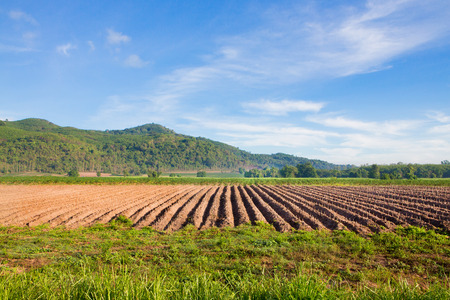 View garden area to prepare crops in Thailand.