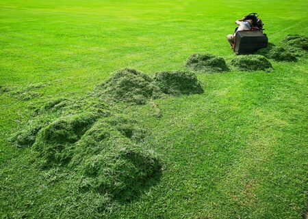 Grass on the football field that has been cut