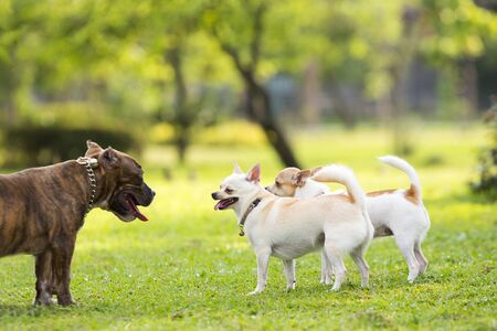 Running dogs on the lawn in the garden 写真素材 - 127031187