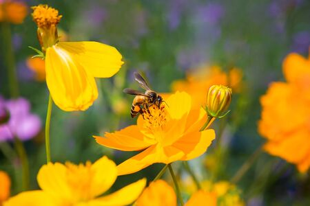 Bees that cling to flowers on a background in the garden
