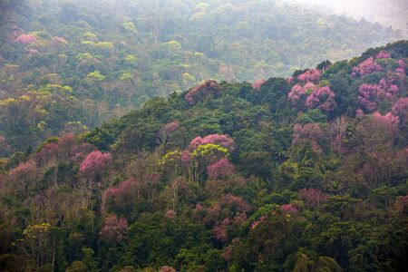 forests and flowers on the mountains in Thailand 写真素材