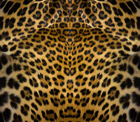 Close-up of leopard skin on the background 版權商用圖片