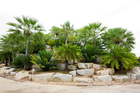 Design background forest garden stone ornamental garden Banque d'images