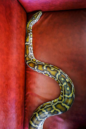 Hand snake shown for educational purposes in the museum.