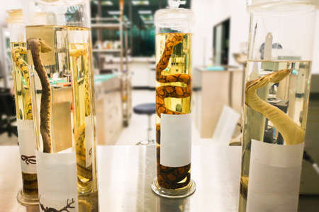 the a lot of different kind of snake specimen are stored in glass jar