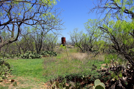 Old Rusty Deer Game Feeder in West Texas Mesquite forest
