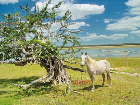 Horse Next to an odd Tree 스톡 콘텐츠