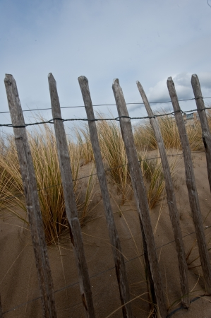Dunes with marram grass in North Holland
