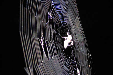 aracnidos: Spiders Web