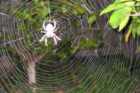 arachnids: Spider on its web
