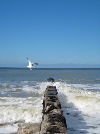groyne: Groyne and Seagull