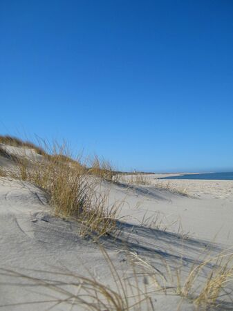 Beach grass and blue sky