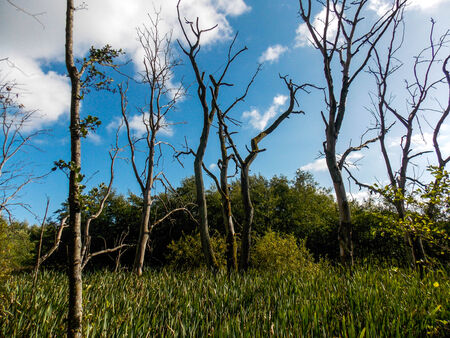 swampland: Swampland
