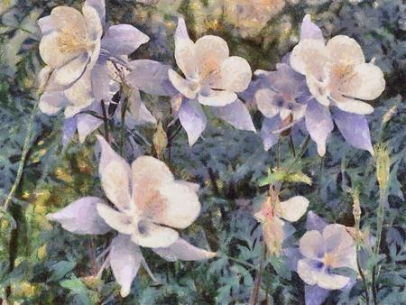 An photo art  illustration of columbine flowers