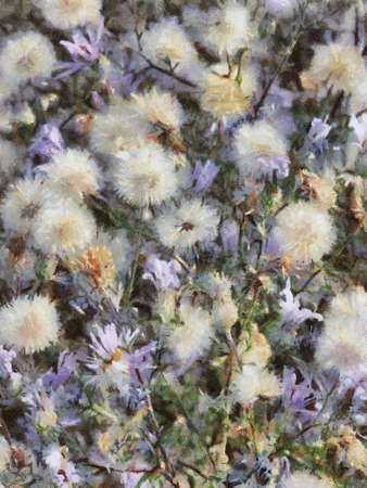A photo art illustration of knapweed blossoms and seeds Фото со стока