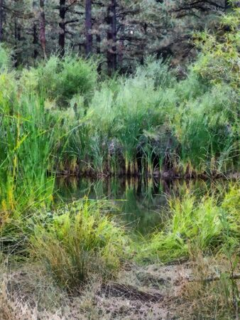cattail: A digital photo-art illustration of a pond in a forest