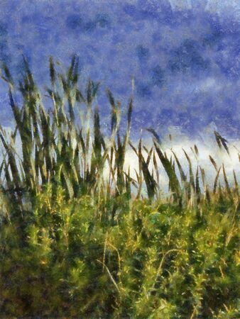 cattails: A digital photo-art illustration of cattails against the sky Stock Photo