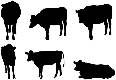 domestic cattle: Set of 6 cow silhouettes