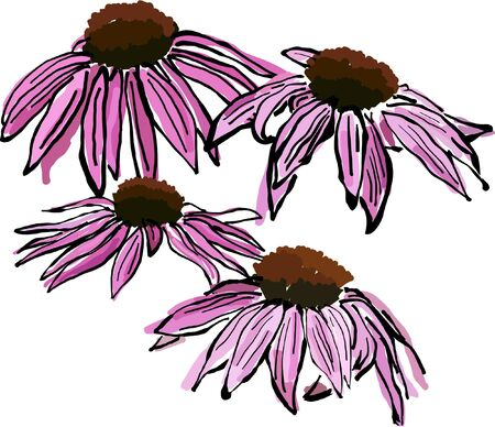 colds: Pink Sketchy Echinacea flowers. Echinacea flowers are considered a natural remedy and preventative for colds and flu.