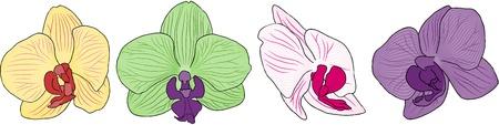 orchidee: Set di quattro fiori di orchidea per l'uso nel vostro disegno