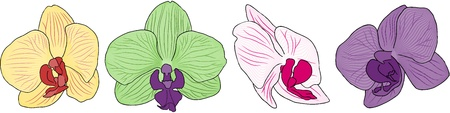 Set of Four Orchid Flowers for use in your design