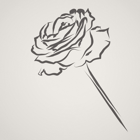A Rose drawn in an Ink Brush style on a textured paper effect background with space for your text  Vector