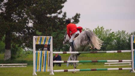 caballo saltando: Caballo de competición de salto