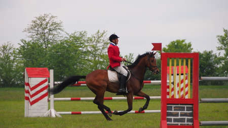 cavallo che salta: Cavallo concorso di salto Editoriali