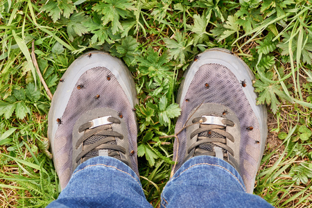 Acaricidal danger. Lots of encephalitic mites on human shoes after walking through the grass Stock Photo