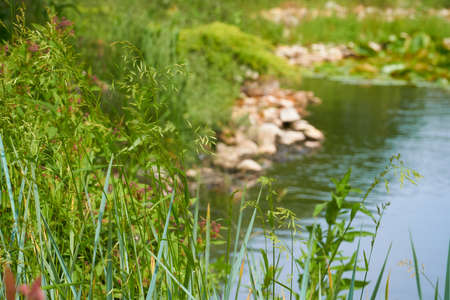 The picturesque bank of the pond, on which stones lie and grass grows. Camera focus on grass