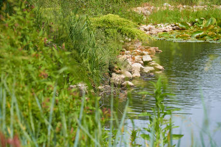 The picturesque bank of the pond, on which stones lie and grass grows. Camera focus on stones Stockfoto