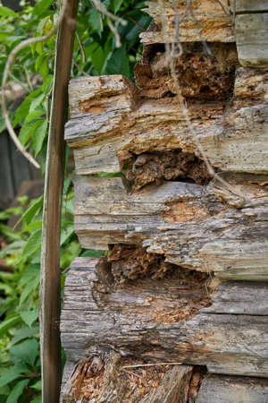 Abandoned log house. Collapsing corner of a wooden house. Damaged logs close up Foto de archivo