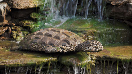 Decorative fountain. Decorative stucco sculpture of a turtle made of stone and shells. Close-up. October 4, 2020, Russia, Moscow 新聞圖片