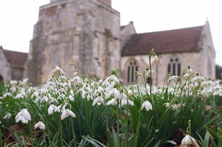 churchyard: Churchyard with snowdrops
