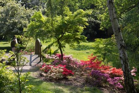english garden: Furzey - English country garden in spring