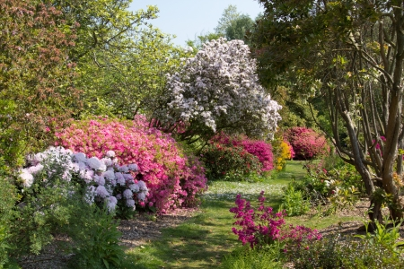 Furzey - English country garden in spring photo