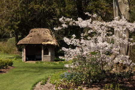 thatched: Ornamental cherry blossom with thatched hut