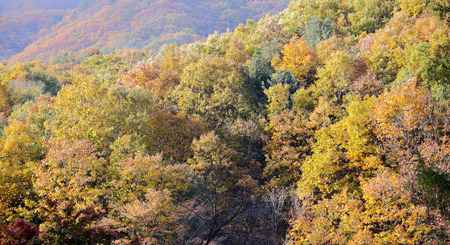 Beautiful autumn landscape with colorful in South Korea photo