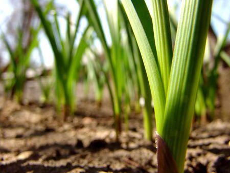 A green plant closeup Stock Photo - 835713