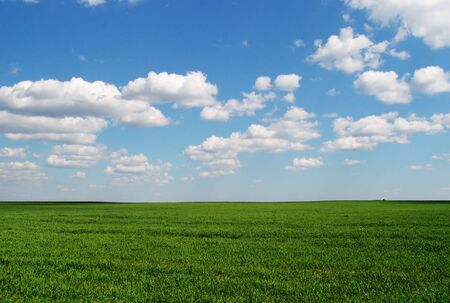 A grass field consisting only of grass and clouds in the sky