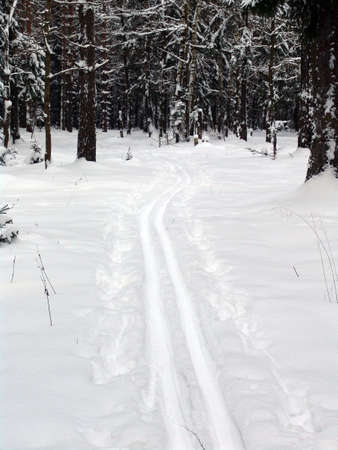 A forest with lines made by skiing people Stock Photo - 2051082
