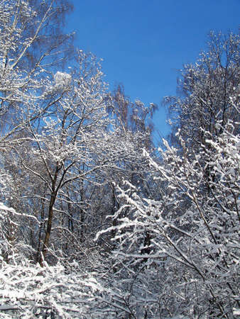 A view of a forest right after a snowfall Stock Photo - 2051085