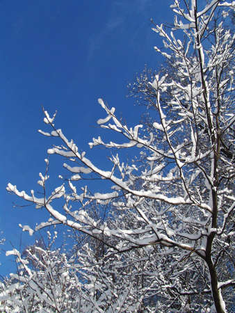 arbre: A view of forest right after a snowfall Stock Photo
