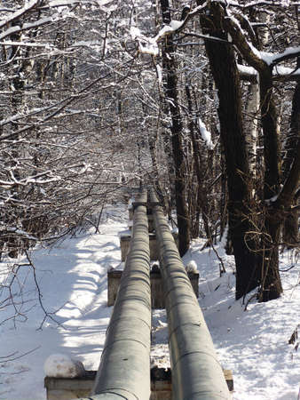 Metallic water tubes going through a nice winter forest photo
