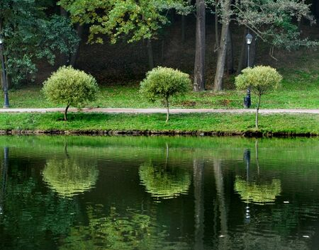 A view of three small trees growing at a park lake border photo