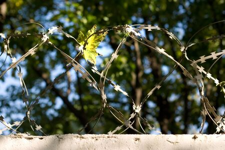 A view of a wall with barbed wire photo