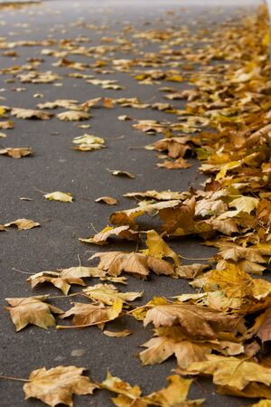 Yellow autumn leaves on a park road
