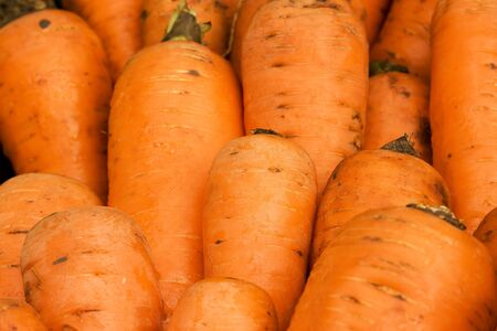 A closeup of carrot rows Imagens