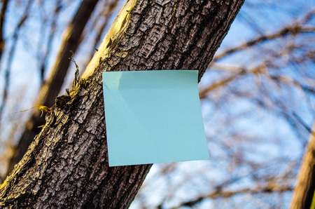 A note on the tree  photo