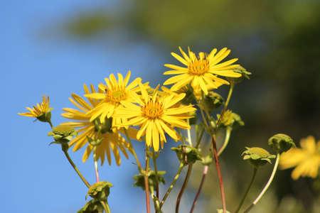 Yellow Flowers Banco de Imagens